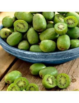 Mini kiwi ´ISSAI´ 40-60 cm,...