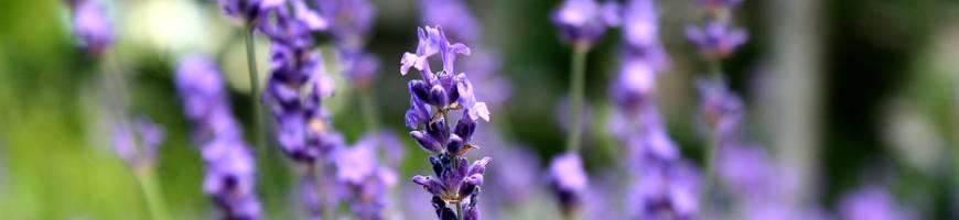 Kvetiny, bylinky a cibuľoviny