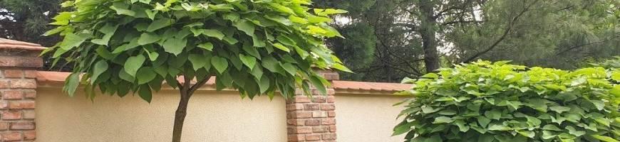 Dreviny na kmienku