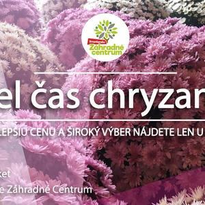 Dušičky sú za rohom 🎃 a preto sme si pre vás pripravili ponuku chryzantém, ktorými nielen že skrášlite hroby, ale tak isto si uctíte pamiatku svojich zosnulých milovaných.  #november #halloween  #dusicky #flora #chryzanthema