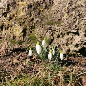 Jar už je za dverami 😊  #zahrada #jar #floramarket #slniecko
