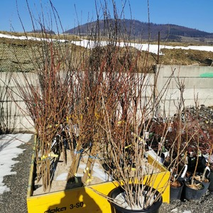 Za chvíľku je tu jar, Vy si môžete vykopať jamu na záhradke pre Vás stromček už teraz. Objednávať stromčeky môžete na našom e-shope www.floramarket.sk  #floramarket #zahrada #jar #ovocnestromy